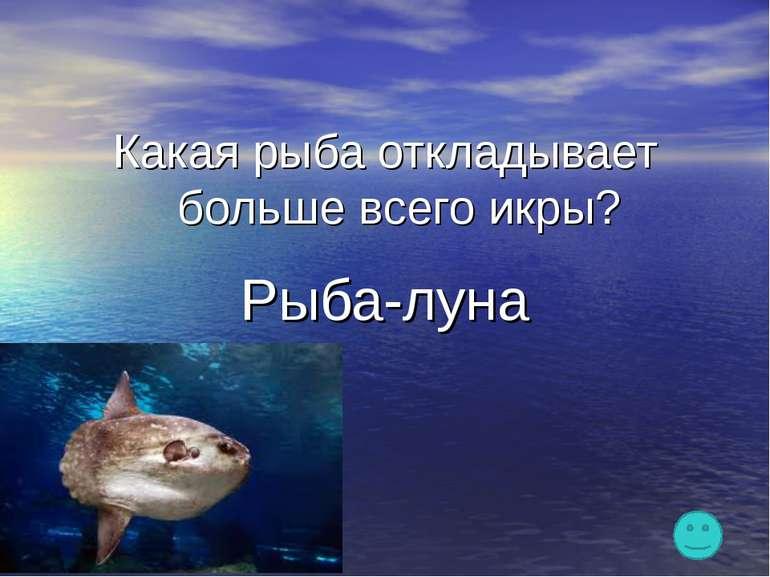 Какая рыба откладывает больше всего икры? Рыба-луна