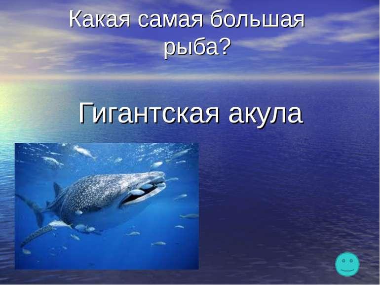 Какая самая большая рыба? Гигантская акула