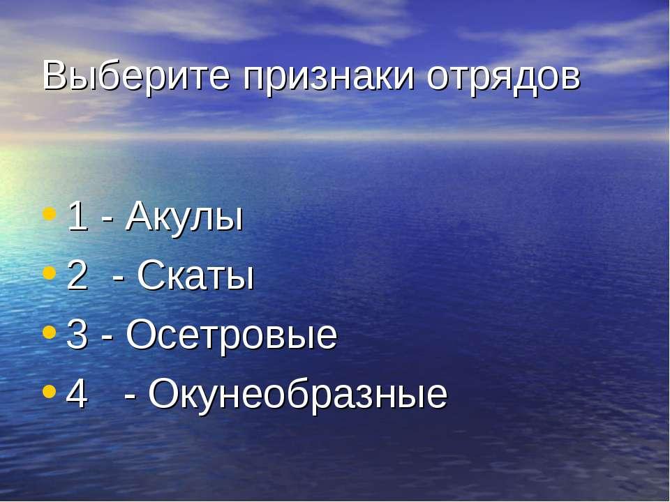 Выберите признаки отрядов 1 - Акулы 2 - Скаты 3 - Осетровые 4 - Окунеобразные