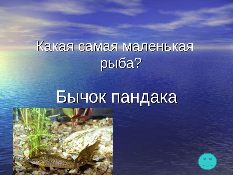 Какая самая маленькая рыба? Бычок пандака