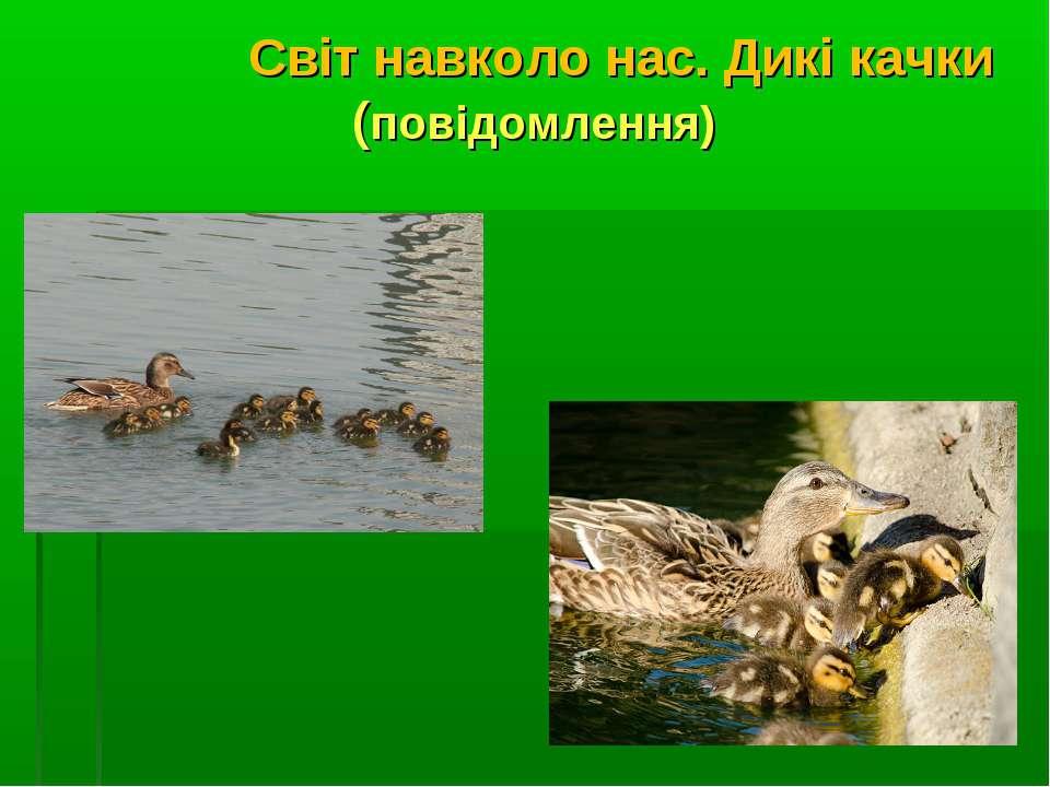 Світ навколо нас. Дикі качки (повідомлення)