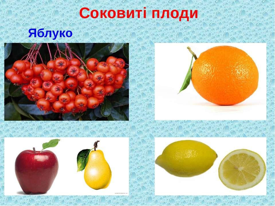 Соковиті плоди Яблуко Помаранча
