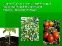 Сонячне світло і тепло потрібне, щоб проростало насіння, квітували рослини, д...