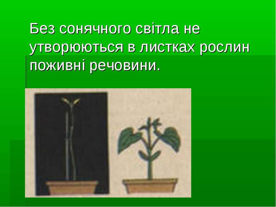 Без сонячного світла не утворюються в листках рослин поживні речовини.