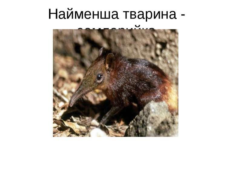 Найменша тварина - землерийка