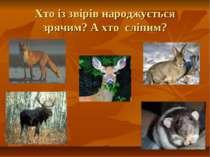 Хто із звірів народжується зрячим? А хто сліпим?