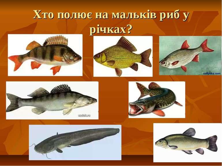 Хто полює на мальків риб у річках?