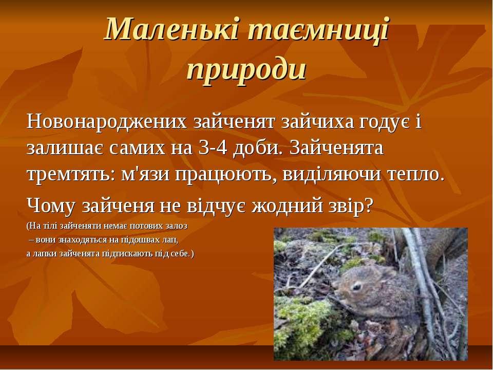 Маленькі таємниці природи Новонароджених зайченят зайчиха годує і залишає сам...