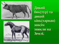 Дикий бик(тур) та дикий кінь(тарпан) зовсім зникли на Землі.