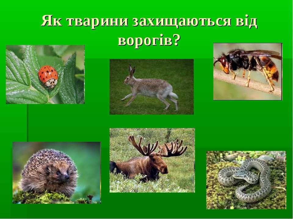 Як тварини захищаються від ворогів?