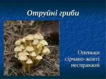Отруйні гриби Опеньки сірчано-жовті несправжні