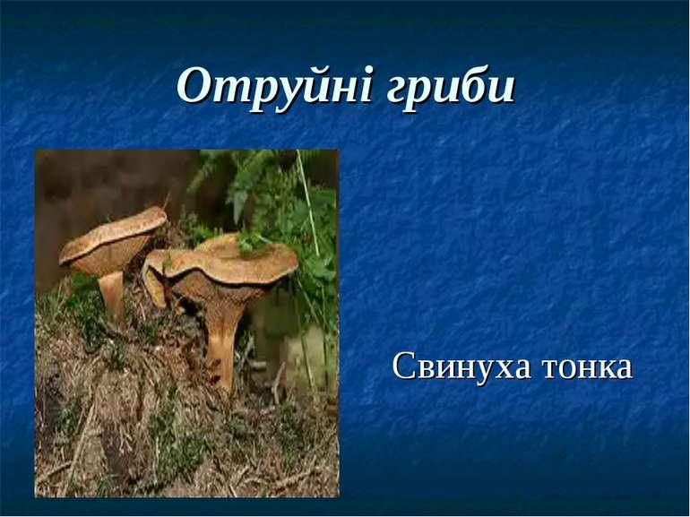 Отруйні гриби Свинуха тонка