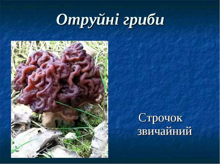 Отруйні гриби Строчок звичайний