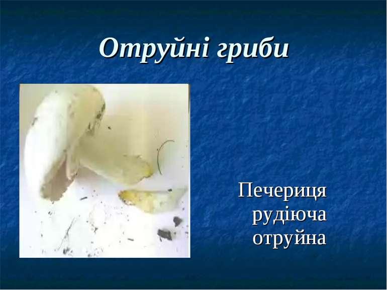 Отруйні гриби Печериця рудіюча отруйна