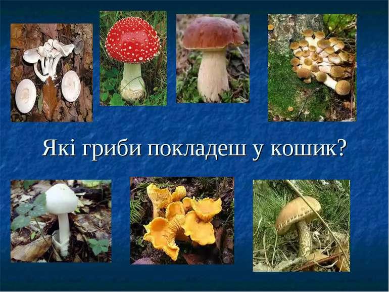 Які гриби покладеш у кошик?