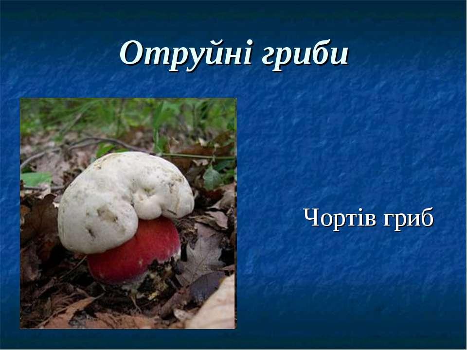 Отруйні гриби Чортів гриб