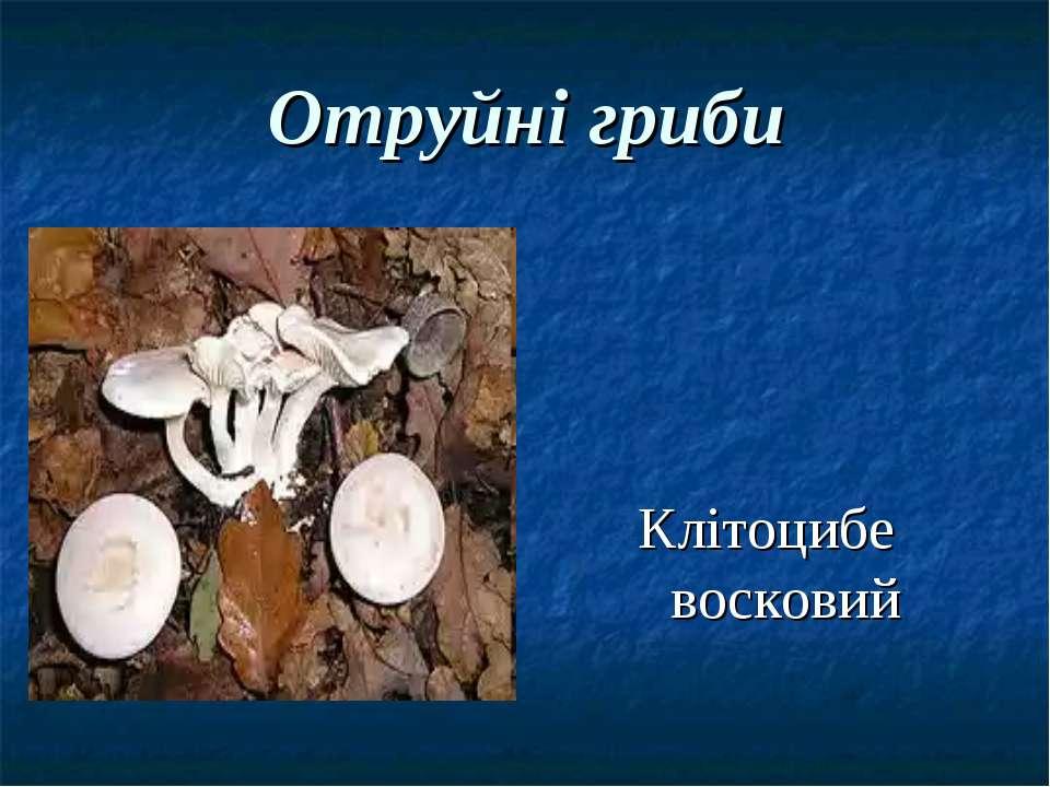 Отруйні гриби Клітоцибе восковий