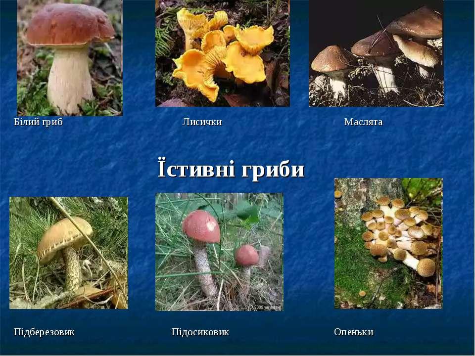 Білий гриб Лисички Маслята Їстивні гриби Підберезовик Підосиковик Опеньки