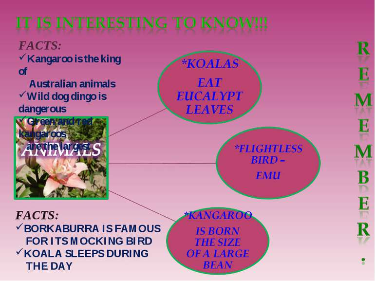 FACTS: Kangaroo is the king of Australian animals Wild dog dingo is dangerous...