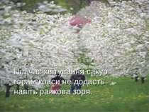 Під час квітування сакур горам краси не додасть навіть ранкова зоря.