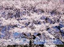 Сакура – японська вишня
