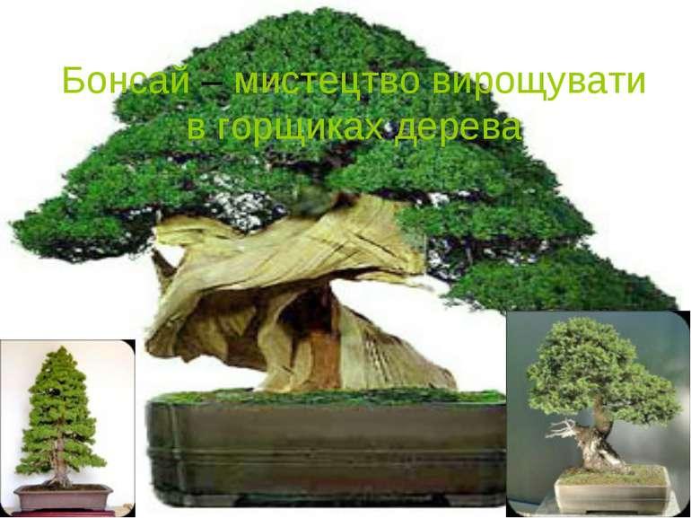 Бонсай – мистецтво вирощувати в горщиках дерева