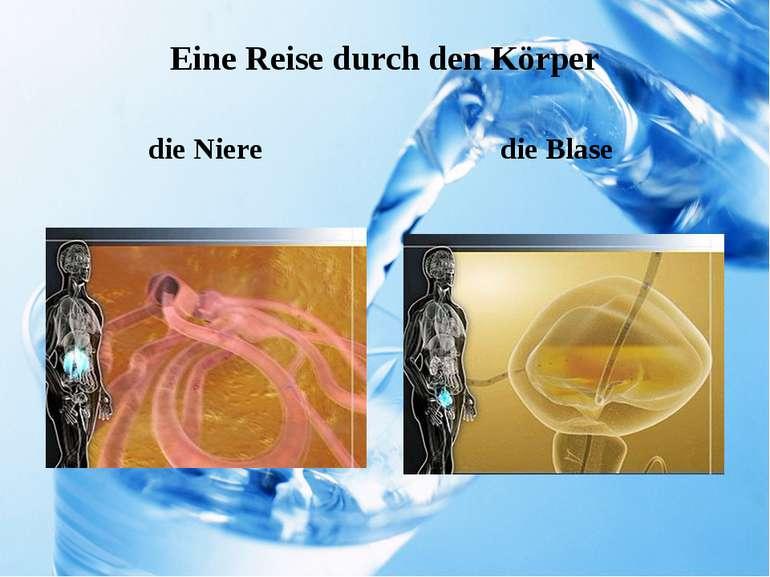 Eine Reise durch den Körper die Niere die Blase