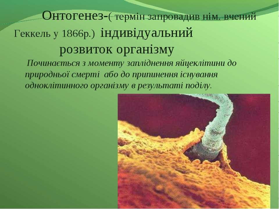 Онтогенез-( термін запровадив нім. вчений Геккель у 1866р.) індивідуальний ро...
