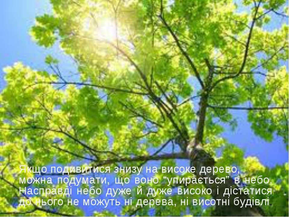 """Якщо подивитися знизу на високе дерево, можна подумати, що воно """"упирається"""" ..."""