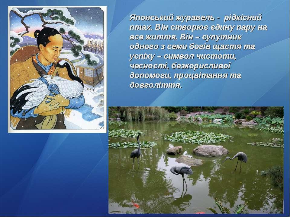 Японський журавель - рідкісний птах. Він створює єдину пару на все життя. Він...