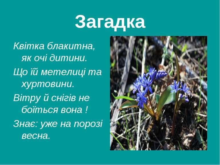 Загадка Квітка блакитна, як очі дитини. Що їй метелиці та хуртовини. Вітру й ...