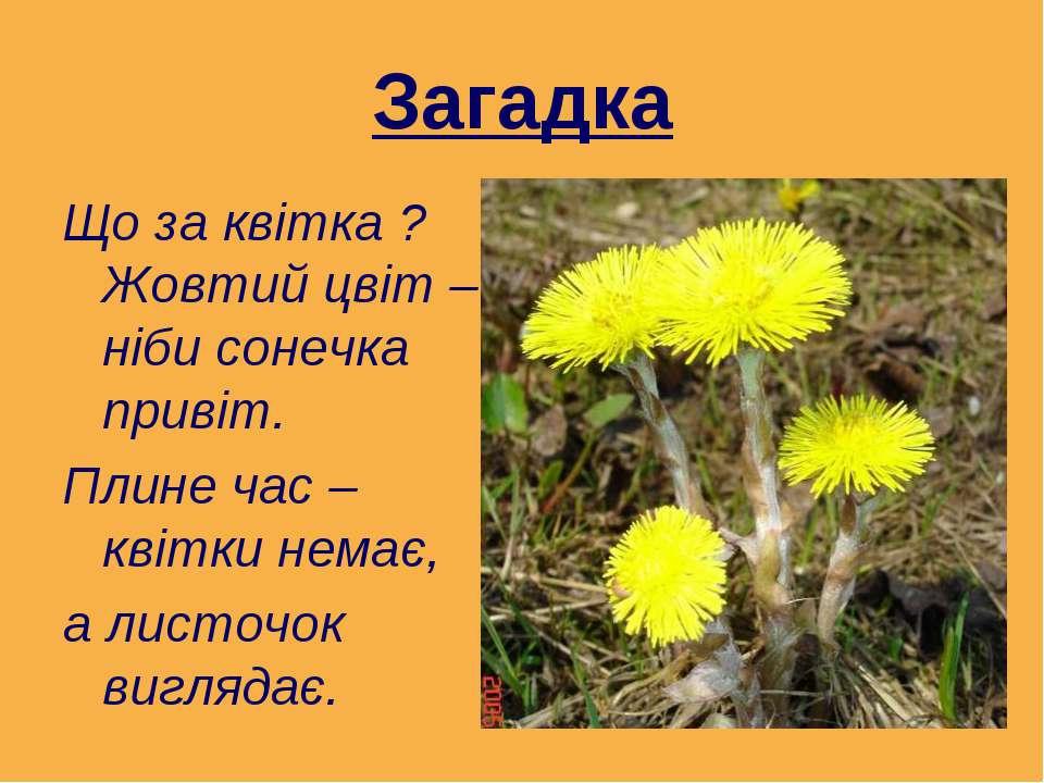 Загадка Що за квітка ? Жовтий цвіт – ніби сонечка привіт. Плине час – квітки ...
