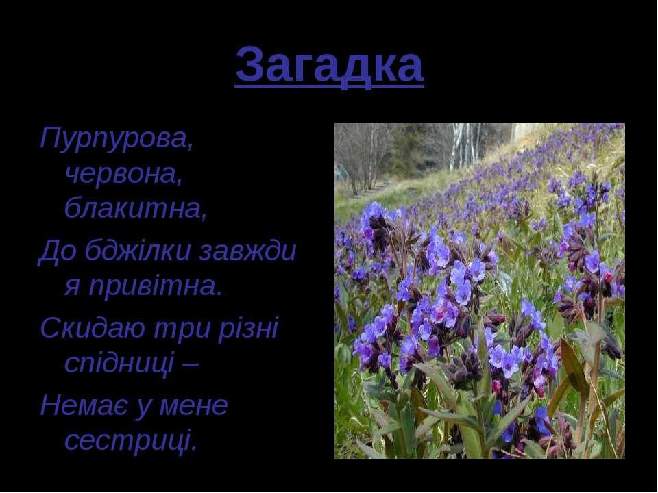 Загадка Пурпурова, червона, блакитна, До бджілки завжди я привітна. Скидаю тр...