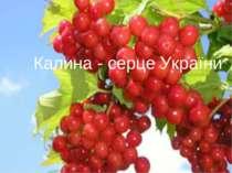 Калина - серце України