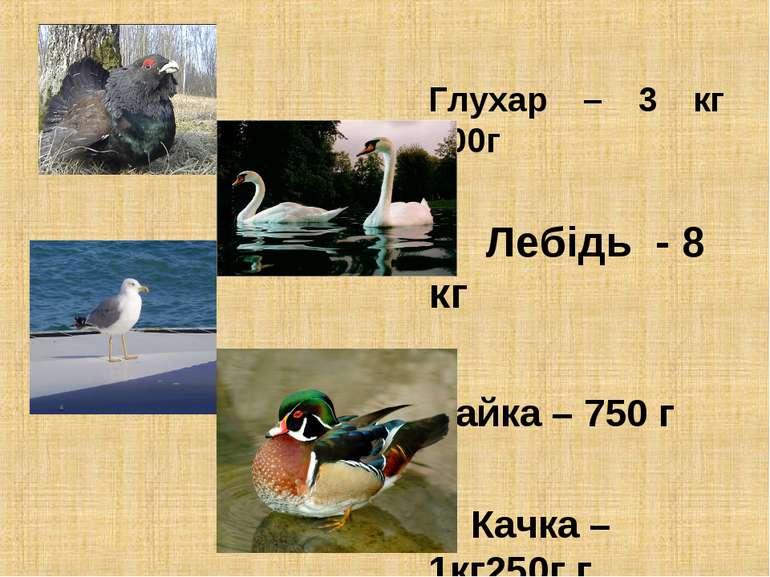 Глухар – 3 кг 200г Лебідь - 8 кг Чайка – 750 г Качка – 1кг250г г