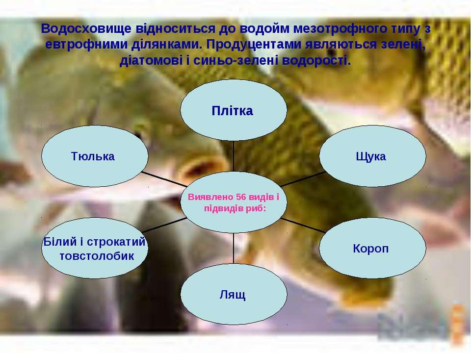 Водосховище відноситься до водойм мезотрофного типу з евтрофними ділянками. П...