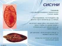 Trematoda – клас широко поширених паразитичних пласких червів; тіло видовжене...