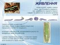 ЖИВЛЕННЯ травна система складається з ротового отвору та двох відділів кишечн...