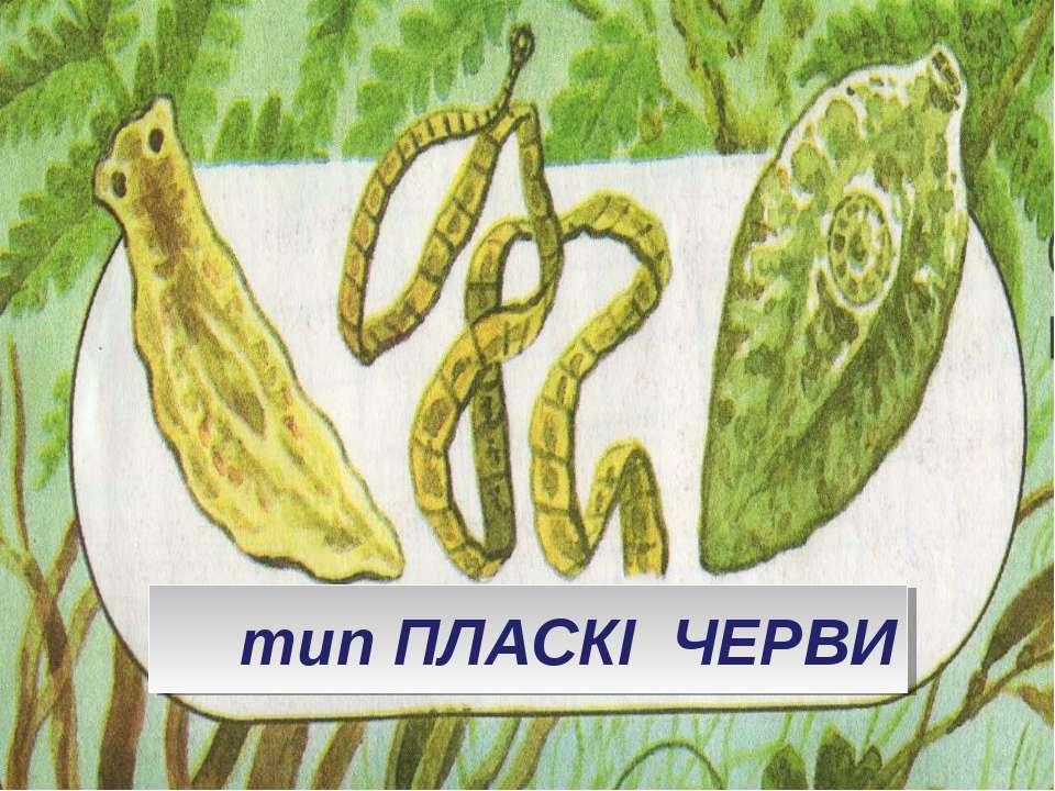 тип ПЛАСКІ ЧЕРВИ