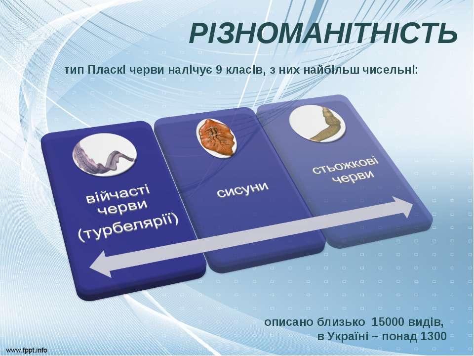 РІЗНОМАНІТНІСТЬ описано близько 15000 видів, в Україні – понад 1300 тип Пласк...