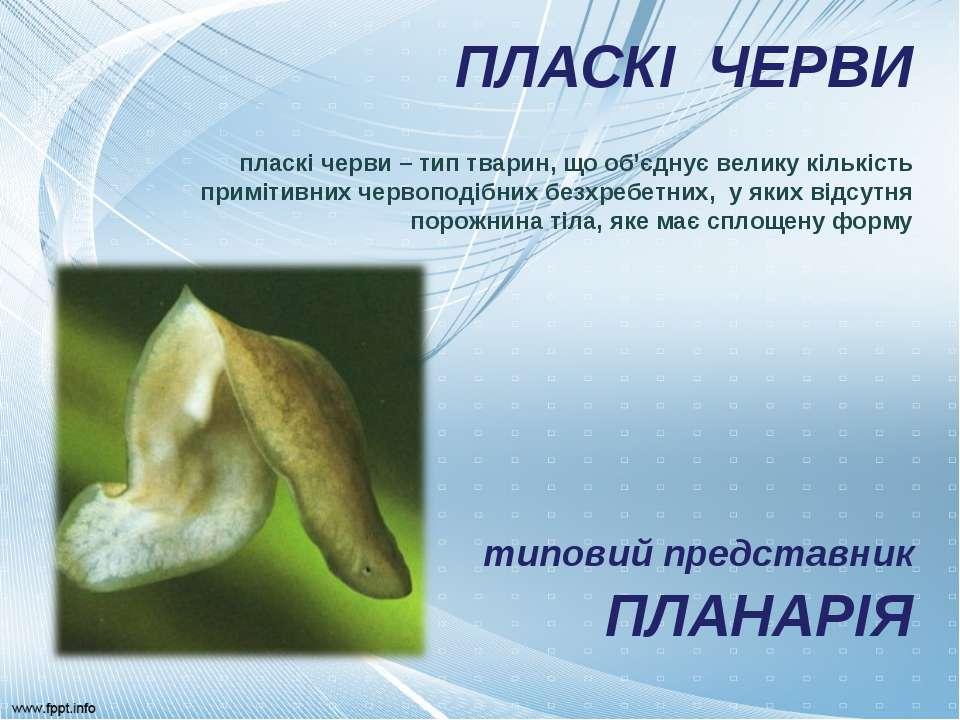 ПЛАСКІ ЧЕРВИ пласкі черви – тип тварин, що об'єднує велику кількість примітив...