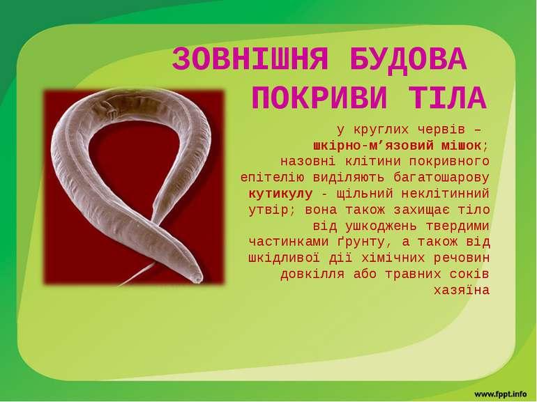 ЗОВНІШНЯ БУДОВА ПОКРИВИ ТІЛА у круглих червів – шкірно-м'язовий мішок; назовн...