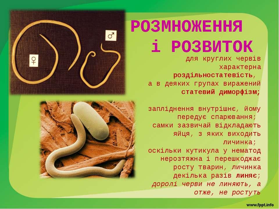 РОЗМНОЖЕННЯ і РОЗВИТОК  для круглих червів характерна роздільностатевість...
