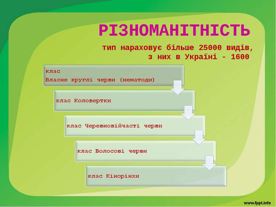 РІЗНОМАНІТНІСТЬ тип нараховує більше 25000 видів, з них в Україні - 1600