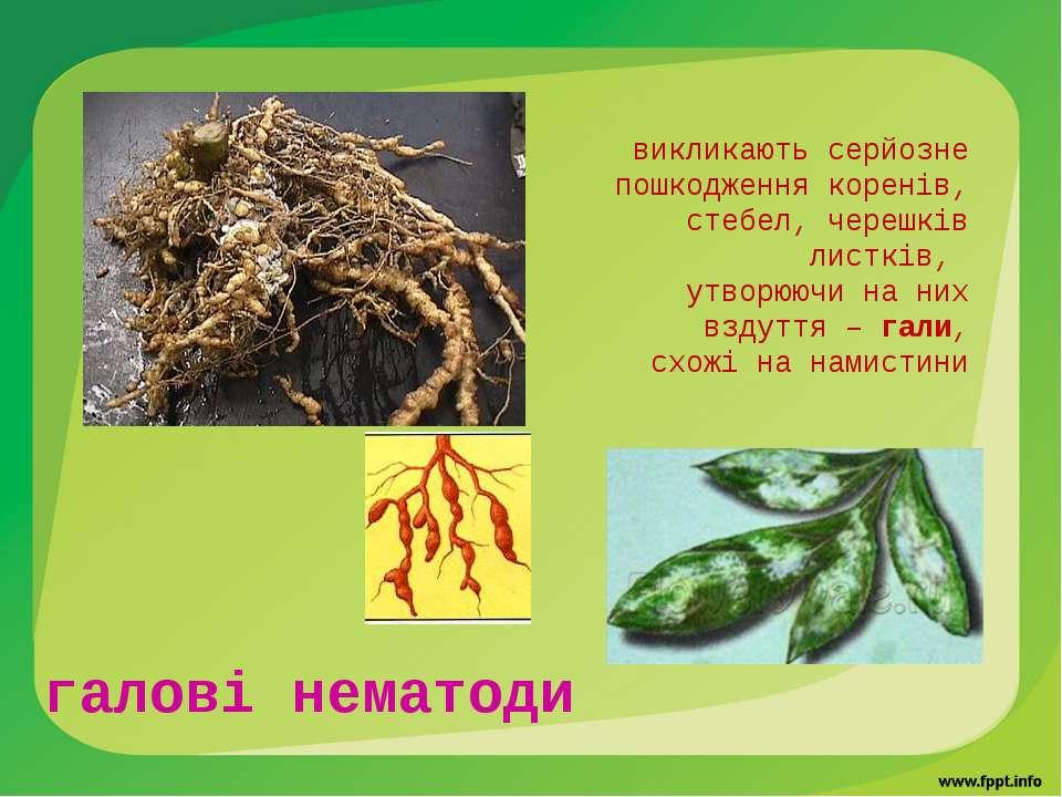 галові нематоди викликають серйозне пошкодження коренів, стебел, черешків лис...