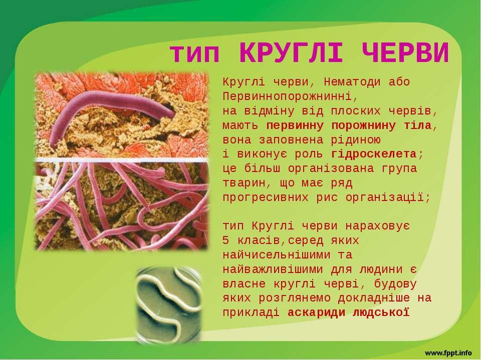 Круглі черви, Нематоди або Первиннопорожнинні, на відміну від плоских червів,...
