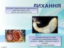 у водяних кільчастих червів з'являються спеціалізовані органи дихання – зяб...