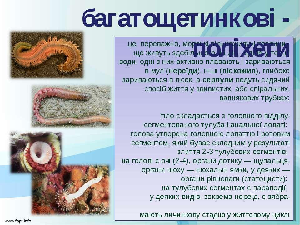 це, переважно, морські вільноживучі тварини, що живуть здебільшого на дні, рі...