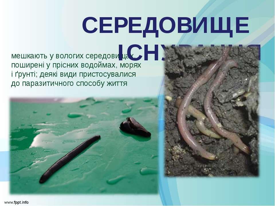 мешкають у вологих середовищах, поширені у прісних водоймах, морях і ґрунті; ...