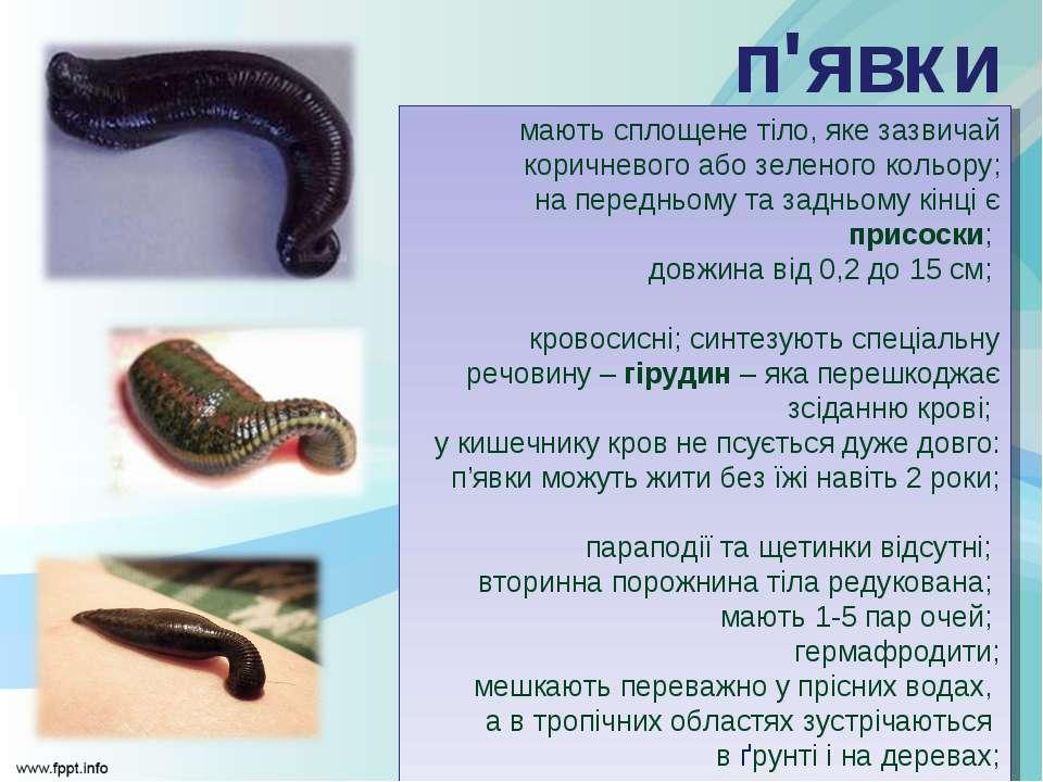 мають сплощене тіло, яке зазвичай коричневого або зеленого кольору; на передн...